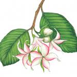 hutabagaki